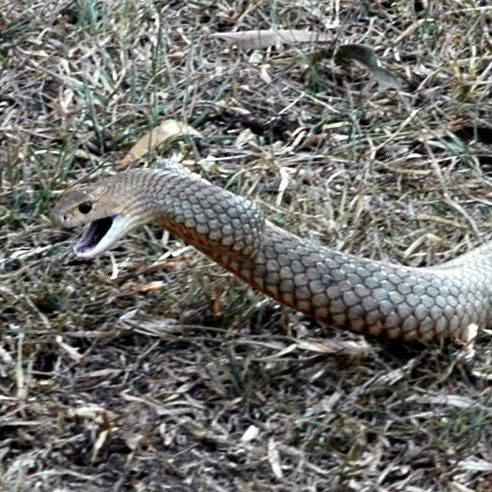 snake-catchers